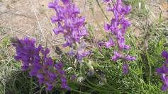 Pretty purple weed flower!